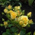 yellow baby(не раскр)