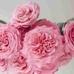 роза эшлей 4