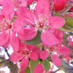 фото яблоня декор мечдекор2